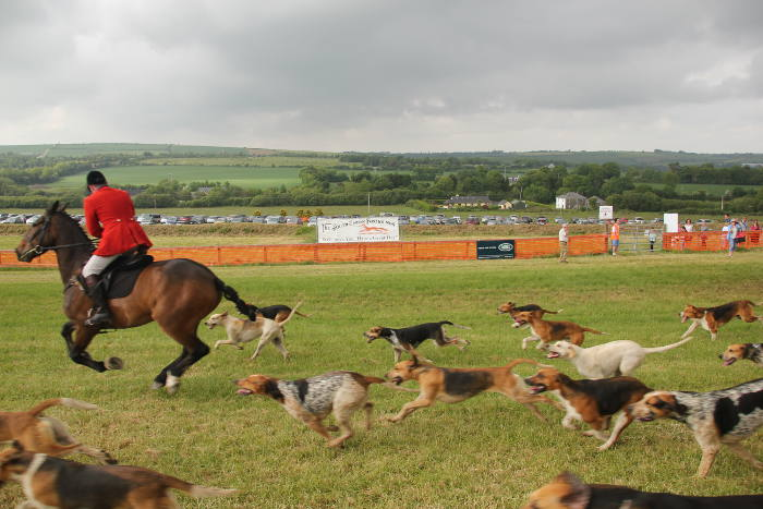 Photograph of hounds parading at Kinsale Point to Point