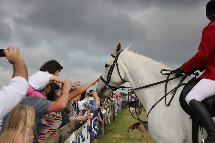 Photograph of parade ring crowd stroking hunt horse at Kinsale Point to Point
